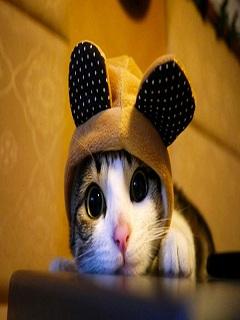 Những hình ảnh đẹp dành cho facebook về chú mèo đáng yêu