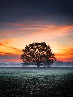 Hình nền đẹp nhất thế giới 3d thiên nhiên lung linh lãng mạn