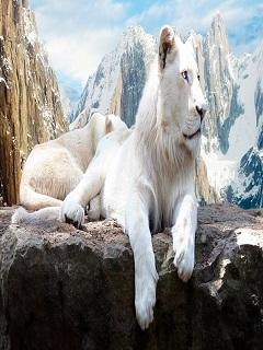Những hình nền sư tử 3d dũng mãnh và uy quyền