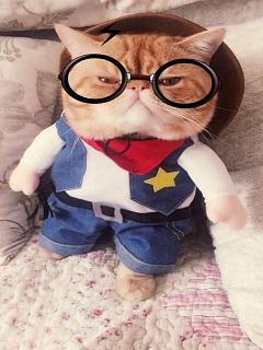 Tải hình nền chế mới hot boy mèo với style cực chất
