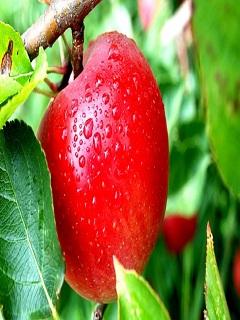 Hình nền trái cây mùa hè căng mọng và thơm mát tuyệt đẹp