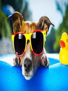 Hình nền mùa hè thú cưng tắm nắng siêu đáng yêu