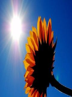 Hình nền mùa hè với cái nắng chói chang gió đung đưa
