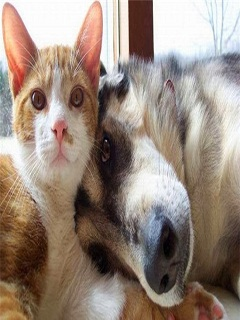 Hình nền tình yêu chó mèo mang lại cảm xúc khó quên