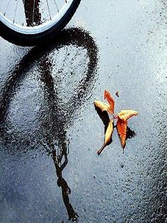 Tải hình nền mùa hè cơn mưa bất chợt thoáng qua trong đời